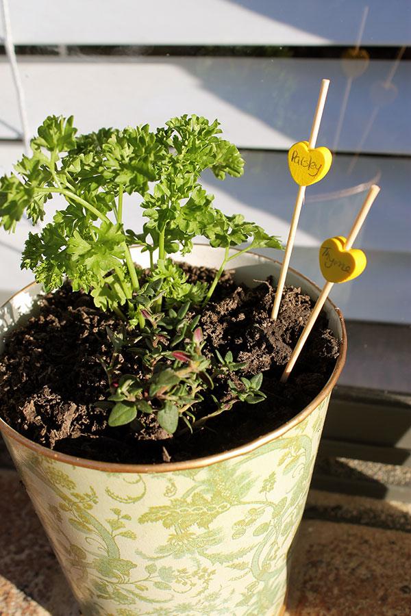 Herb-Gardening-7