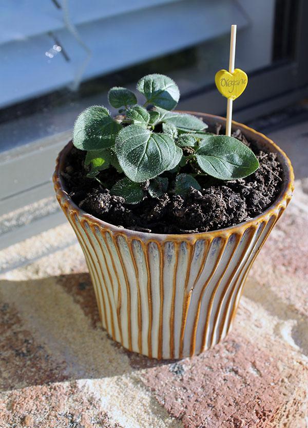 Herb-Gardening-6
